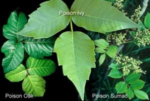 Poison Ivyblaster Poison Ivy Oak Sumac Skin Wash Treatment